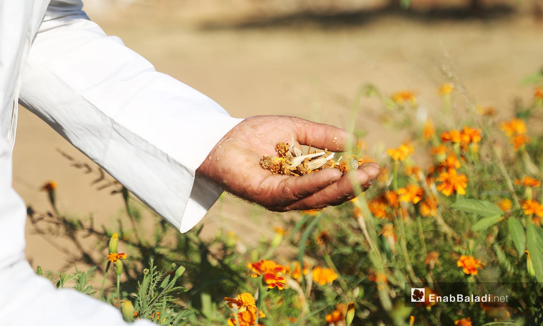 يمسك إبراهيم الموسوي بالزهور التي يحب والتي تذكره بقريته  - تشرين الأول 2020 (عنب بلدي/ يوسف غريبي)