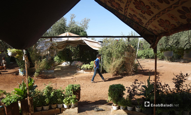 """تحول مخيم """"المطار"""" إلى حديقة واسعة تنتشر فيها الظلال بعد اهتمام سكانه بزراعة النباتات فيها  - تشرين الأول 2020 (عنب بلدي/ يوسف غريبي)"""