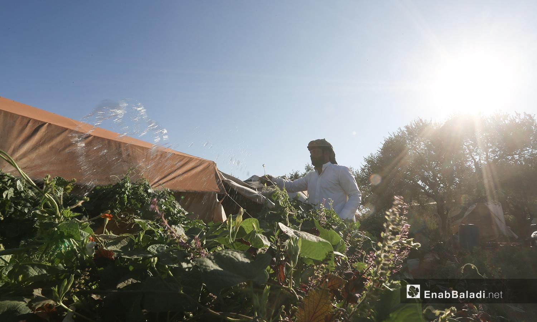 يسقي إبراهيم المزروعات كما اعتاد منذ صغره  - تشرين الأول 2020 (عنب بلدي/ يوسف غريبي)