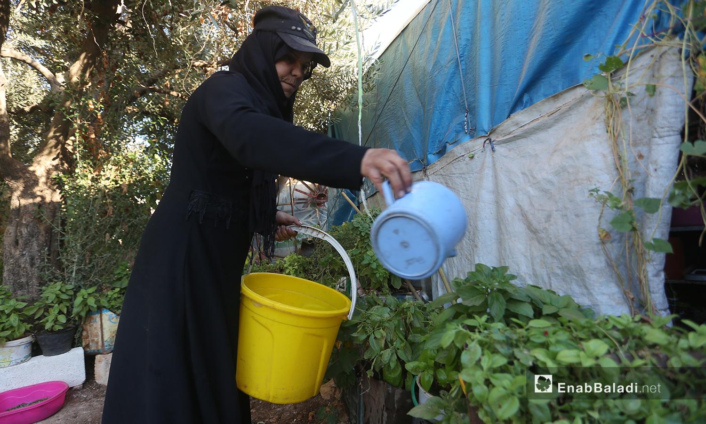 تسقي حورية النباتات وتعتني بها وهي تسعى لجعل مكان إقامتها في المخيم يشبه بيتها الذي اضطرت لمغادرته من ريف حلب الجنوبي - تشرين الأول 2020 (عنب بلدي/ يوسف غريبي)