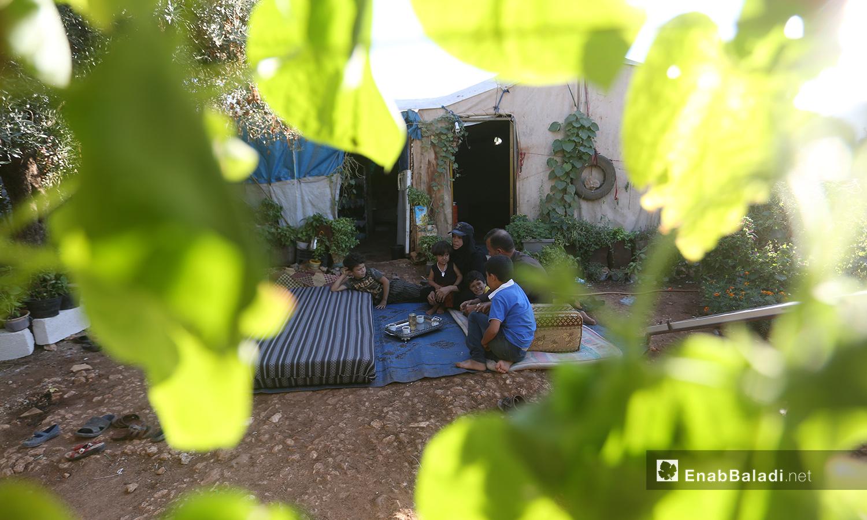 """تشارك عائلات مخيم """"المطار"""" حورية بحبها للنباتات والزراعة ويفضلون الجلوس بينها خارج الخيام - تشرين الأول 2020 (عنب بلدي/ يوسف غريبي)"""