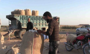 Farmers packing cotton bags in rural Raqqa - October 2020 (North Press Agency)